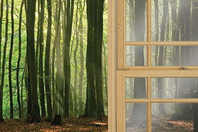 Image d'un espace de vie avec une porte-fenêtre donnant sur une forêt ancienne.