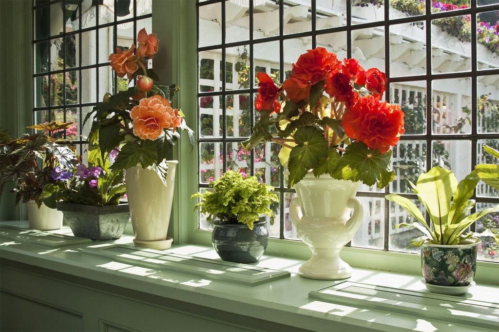 A random assortment of potted plants on windowsill with sun shining upon them.