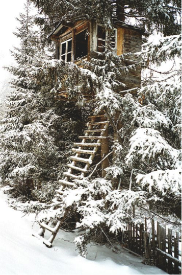 Rustic treehouse partially hidden in spruce trees featuring a rustic ladder leading up made of small logs.